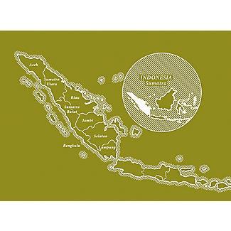 10 Dualit Compostable Sumatra Capsules alt image 6
