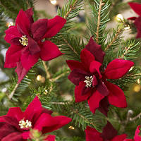 6 Poinsettia Clips