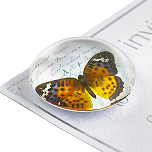 6 Glass Butterfly Magnets