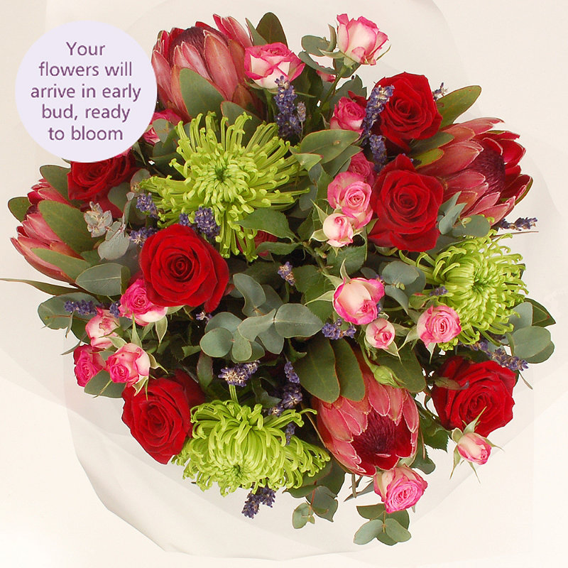 Protea Bouquet with free express delivery