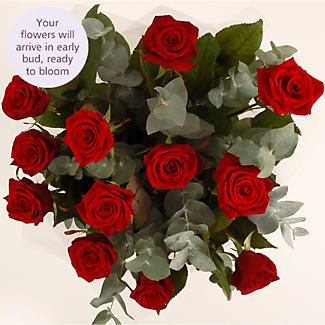 Dozen Red Roses with free express delivery alt image 3