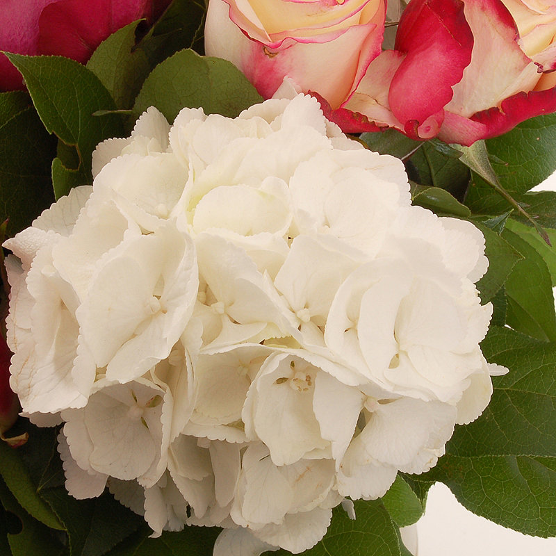 Hydrangea Bouquet with free express delivery