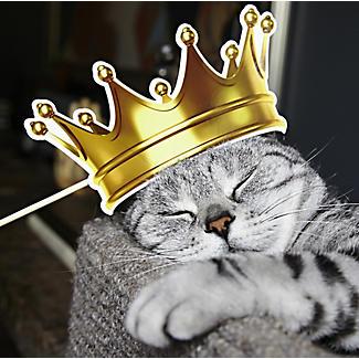 Katzen-Selfies alt image 2