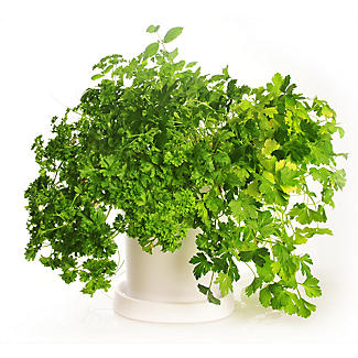 Self-Watering Herb Pot
