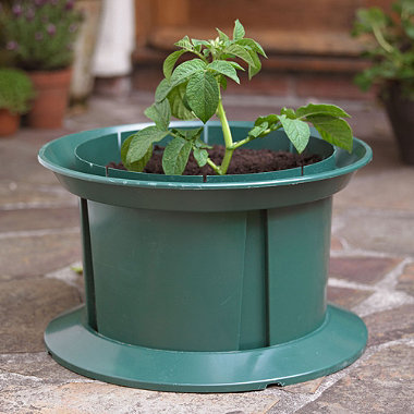 how to grow potatoes in a pot youtube