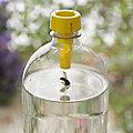 3 Bottle Top Wasp Catchers