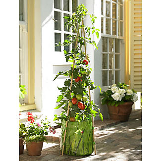 Complete Tomato Growing Kit