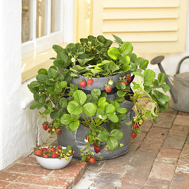 Strawberry Zigg Zagg® Planter