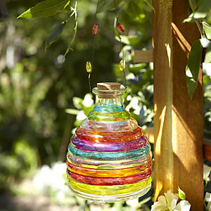 Rainbow Wasp Catcher