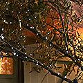 50 Everbright Solar Fairy Lights