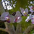 Orchid Solar Light String