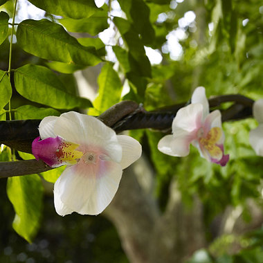 solar lichterkette orchideen in garten beleuchtung und ornamente bei lakeland deutschland. Black Bedroom Furniture Sets. Home Design Ideas