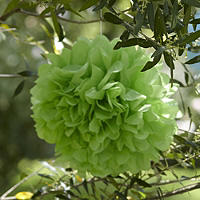 Paper Party Pompoms Green