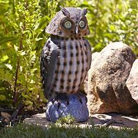 Pest Control Owl