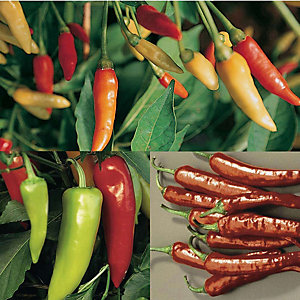 Thompson and Morgan Chilli Pepper Collection