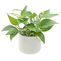 Okidome Eden Suction Planter