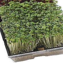 Johnsons MicroGreens Baby Leaves Range