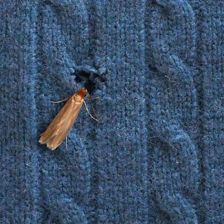 20 Moth Stop Sachets alt image 7