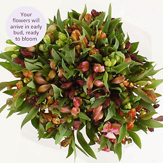 Alstroemeria Bouquet With Free Express Delivery alt image 3