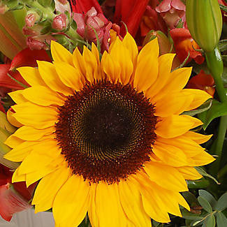 British Sunflower Bouquet with Free Express Delivery alt image 2