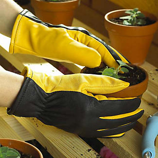Ladies Gold Leaf Dry Touch Gloves