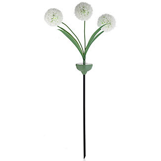 Cream Solar Light-Up Allium