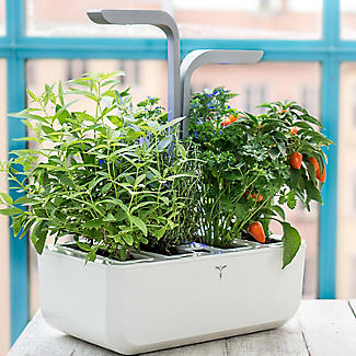 Veritable Smart Garden Lingot Cayenne Hot Chilli alt image 2