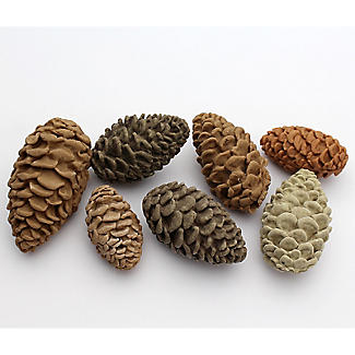 Katy Sue Designs Pine Cones Silicone Mould alt image 5